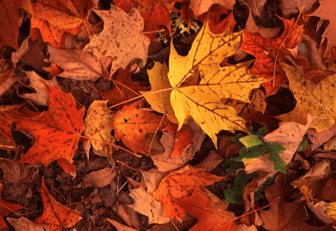 fall-life-in-balance-fall-equinox