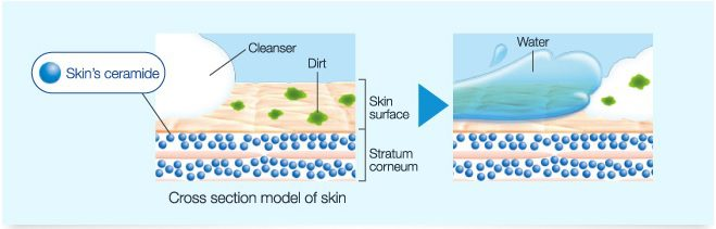 ceramides-fat-mortar-holds-cells-skincells-together-keeping-moisture-deep-into-skincell-layers