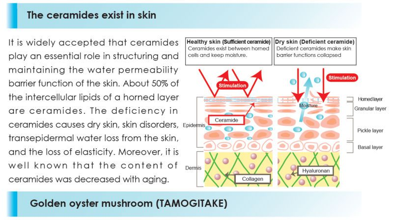 ceramides-solves-problem-of-waterloss-in-skin-most-important-proven-ingredient-for-healthy-skin