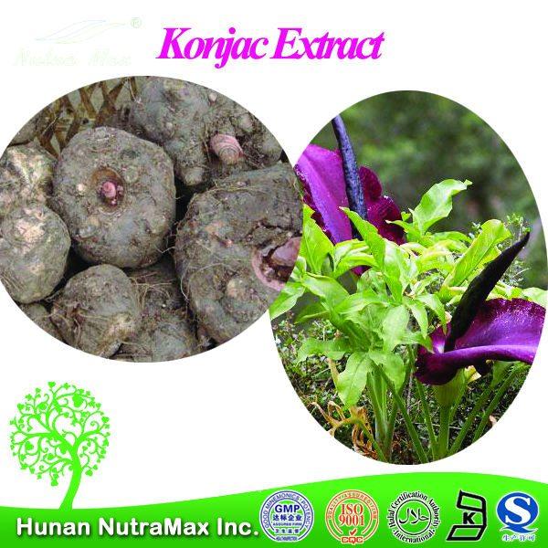 konjac-sponge-konjac-extract-plant