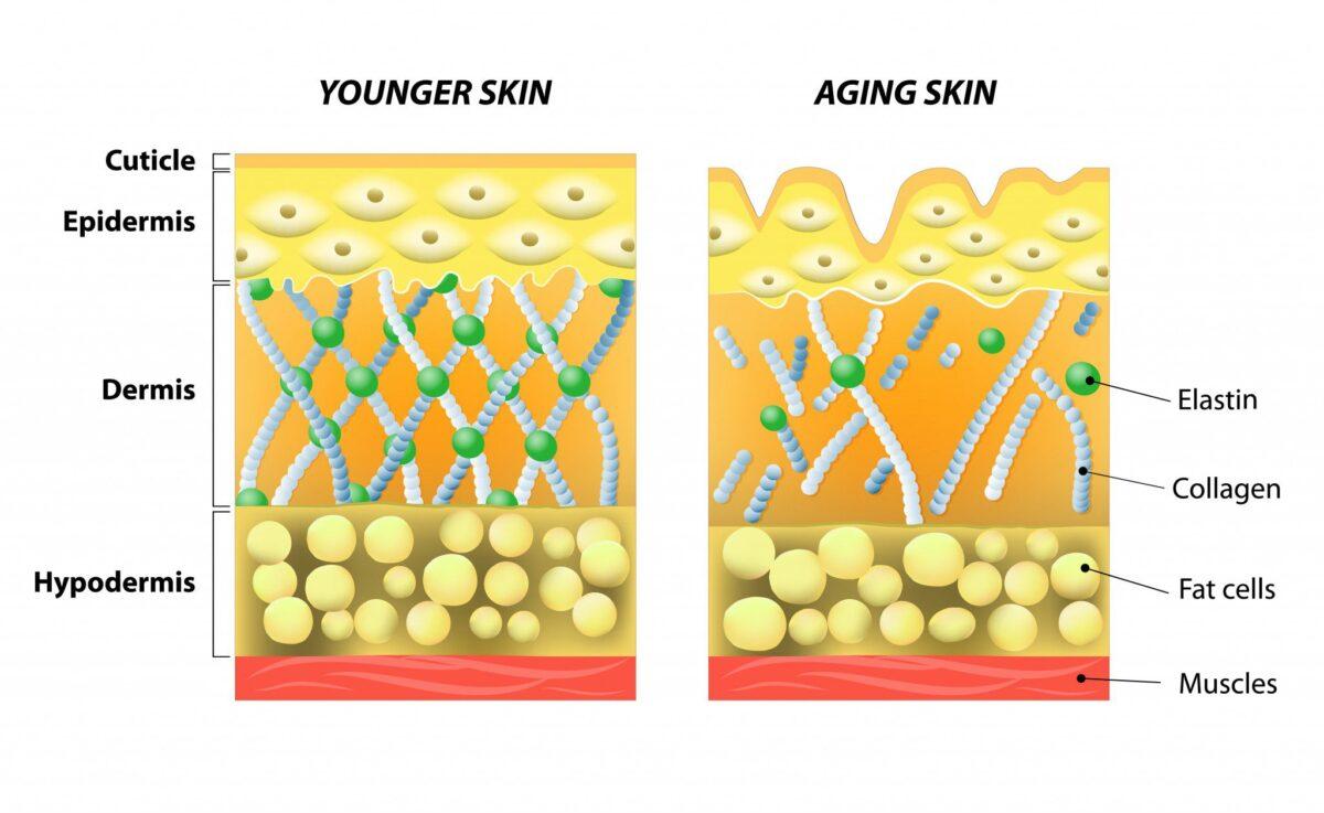 retinol-help-skin-layers-old-young