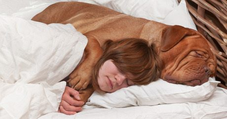 how-to-know-when-your-dog-loves-you