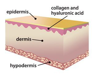 Hyaloronic-acid-and-skin-layers