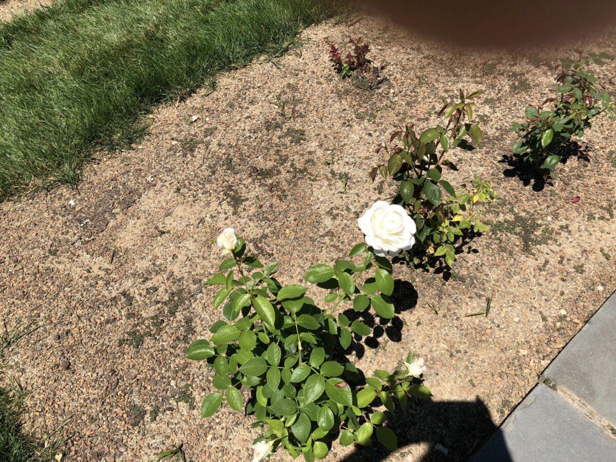 Longwood Gardens Martha Stewart Birthday