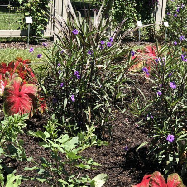 longwood-gardens-summer-gardens-2